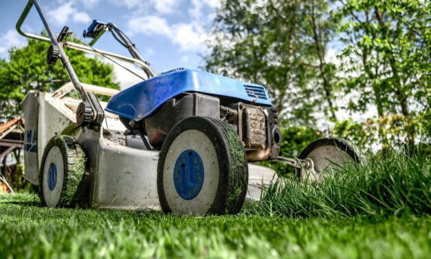 Realizzare un giardino: come scegliere la posizione ideale