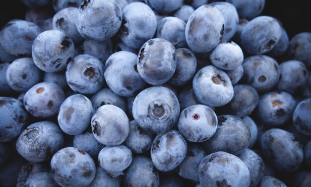 Supercibi per la mente: 10 e più cibi ricchi di antiossidanti